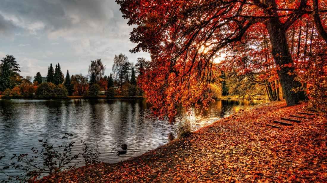 autumn autumn leaves branch color